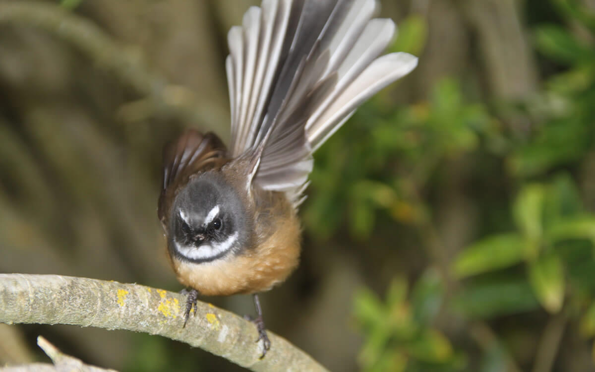 Fantail 1 By A Sparrow Shared By Piwaka Lodge And Backpackers Accommodation Picton